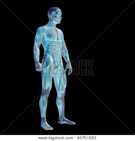 3D human or man with muscles for anatomy or sport designs. A male isolated on black  background