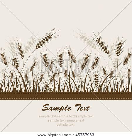 Ã?Â??bstract wheat background