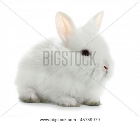 White rabbit bunny baby