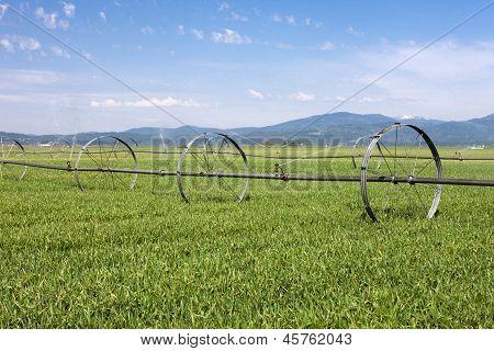 Irrigating The Farm Field.