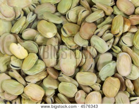 Dessicated Broad Beans
