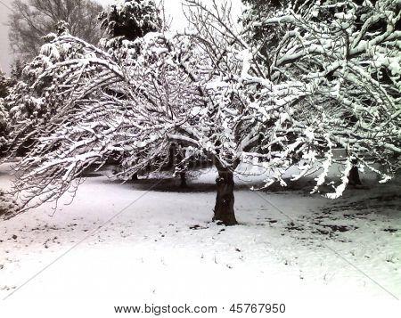 Spreading Tree in Winter