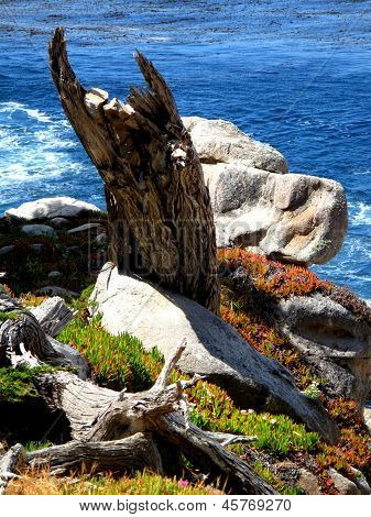 Horned Cypress Stump