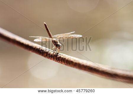 Dragonfly On A Rope