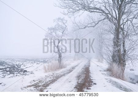 Rural Road In Fog And Snow