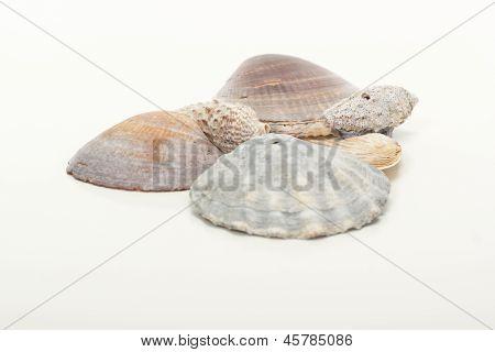 Beautiful Seashells At The Beach