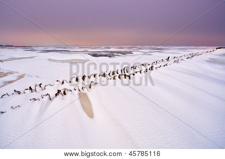 Old Wooden Dike On Frozen North Sea