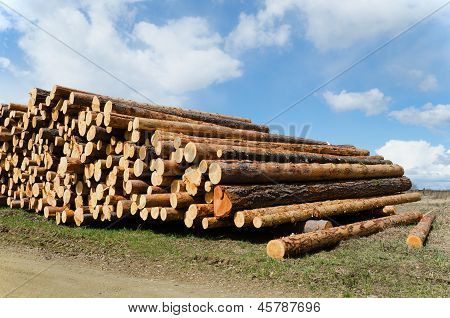 Pine Whole Section Timbers