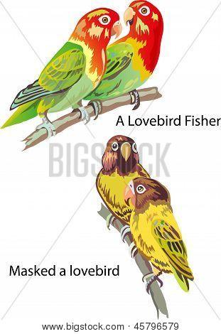 A lovebird