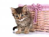 Small kitten in basket isolated on white