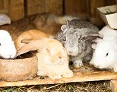foto of rabbit hutch  - Three different rabbits closeup in hutch close up - JPG
