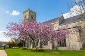 stock photo of nicholas  - Blossom tree in the parish churchyard of St Nicholas in Wells - JPG