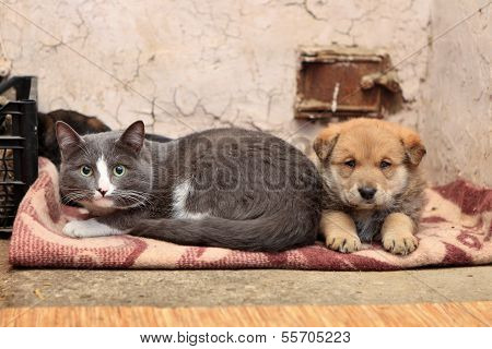 Homeless Cat And Dog
