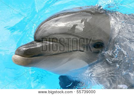 One Smiling Dolphin