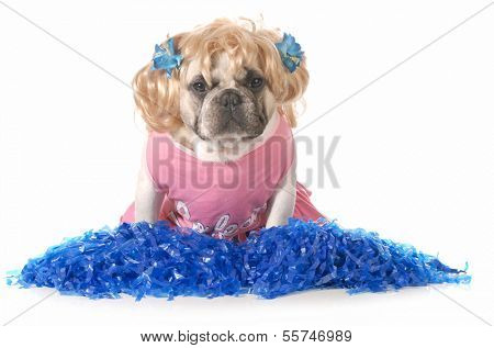 dog dressed up like a cheerleader isolated on white background