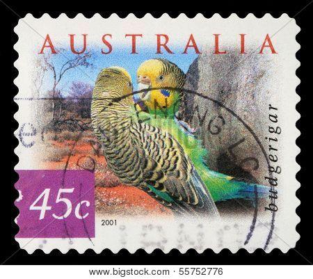 AUSTRALIA - CIRCA 2001: a stamp printed in the Australia shows Budgerigar, Melopsittacus Undulatus, Common Pet Parakeet, Parrot, circa 2001