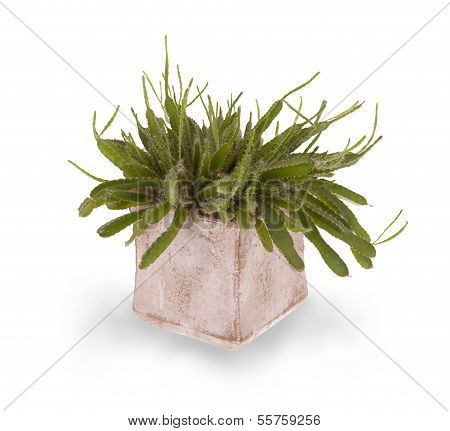 Green Cactus With Small Thorns