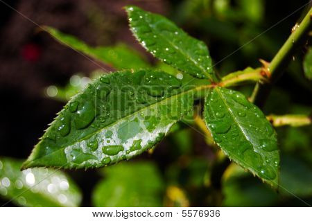 Green Wet Leaves