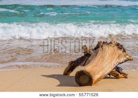 Driftwood on the beach. A beautifully weathered driftwood log Island beach,