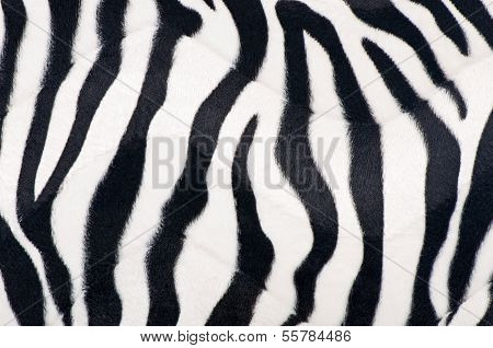 black and white fur background