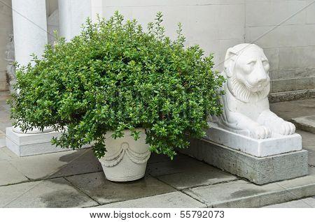 Bush And Statue