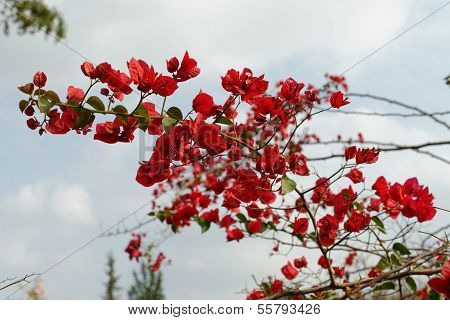 Branch with red flowers on sky background
