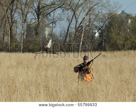 Hunter with a flushing Pheasant