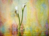 picture of calla  - An Artful composition featuring two white calla lilies in a water filled glass vase set against a colorful watercolor background.