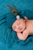 pic of female peacock  - A 12 day old sleeping newborn baby girl wearing an elegant teal flapper hat with rhinestone button and peacock feather - JPG