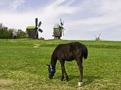 Horse And Windmills