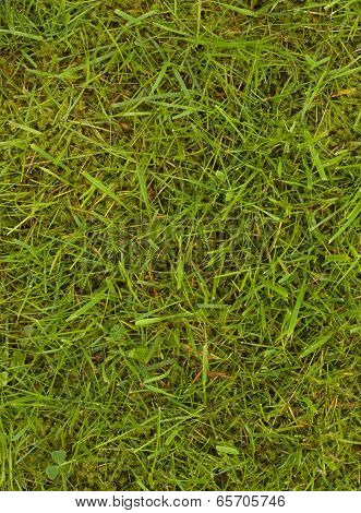 Lawn With Grass And Moss