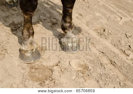 Close Up Of Horse Hooves On Sand