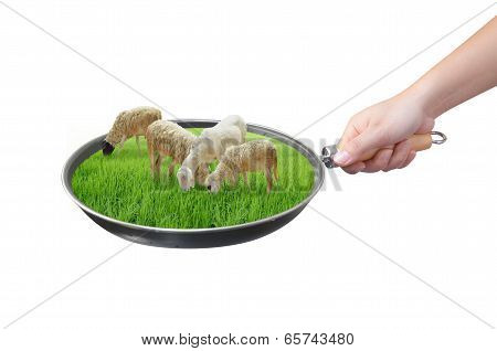 Hand Holding Sheep Farm In Pan Isolated On White