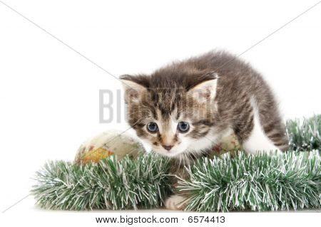 Kitten Skulking Through Christmas Tree Decoration