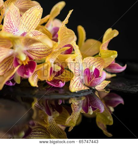 Beautiful Spa Still Life Of Zen Stones With Drops And Blooming Twig Of Stripped Orange Orchid (phala