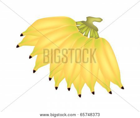 Bunches Of Ripe Asian Banana On White Background