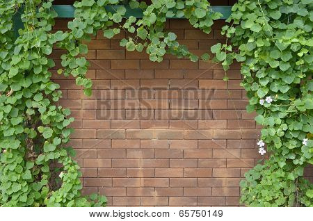 Ivy Bush On Brick Wall Background