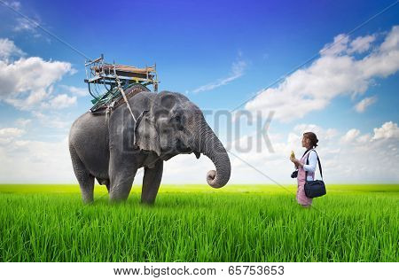 Woman Feeding The Elephant Bananas