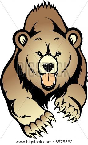 Grizzly  Bear vector