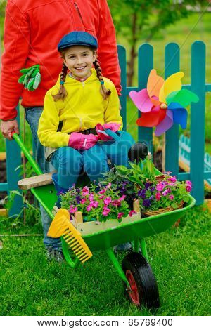Gardening, planting - girl in barrow helping father in the garden