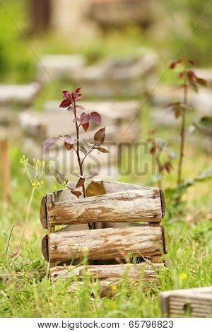 Old wooden crates, outdoors