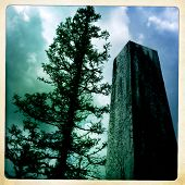 picture of obelisk  - Instagram filtered style image of an obelisk and gnarly pine tree - JPG