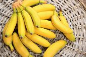 pic of bunch bananas  - Bunch of mini bananas on wicker mat background - JPG
