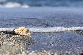 stock photo of oyster shell  - Australian pearls over an old shell on the beach washed by the waves of the sea - JPG