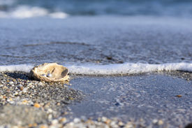 picture of oyster shell  - Australian pearls over an old shell on the beach washed by the waves of the sea - JPG