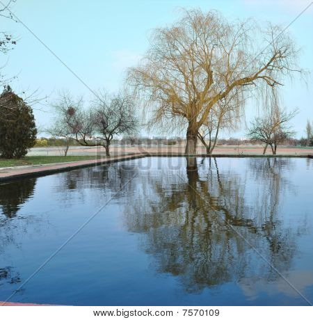 Tree Reflection In Water