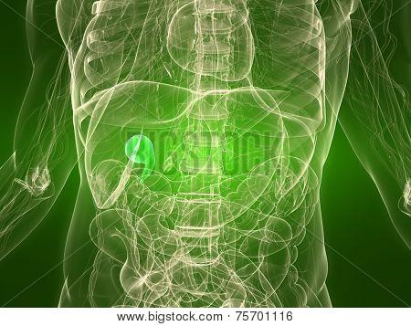 healthy gall bladder