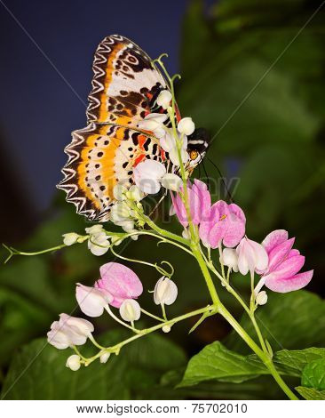 Monarch Butterfly On Small Pink Floweers, Danaus Plexippus