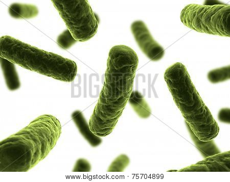 bacteria illustration