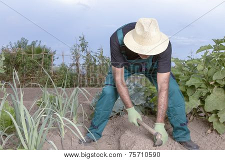 Farmer Sowing His Field